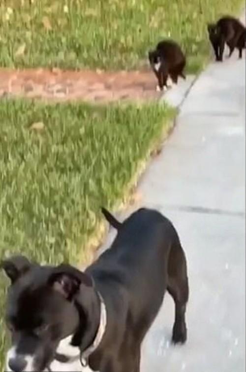 """Can đảm hơn là thắng: """"Team"""" mèo đường phố khiến chó to cũng sợ chạy mất hút ảnh 4"""