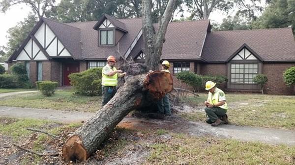 Cảnh báo mùa mưa bão: Nhiều cây sắp chết không hề có dấu hiệu để chúng ta nhận biết ảnh 3
