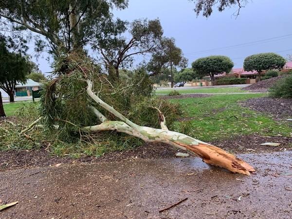 Cảnh báo mùa mưa bão: Nhiều cây sắp chết không hề có dấu hiệu để chúng ta nhận biết ảnh 1
