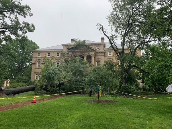 """Nhiều cây cổ thụ đổ trong vài ngày, có cả cây lớn ở trường đại học, đây là """"lời cảnh báo""""? ảnh 1"""