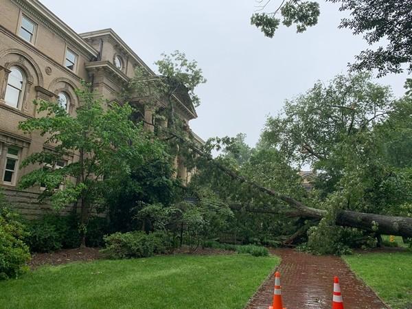 """Nhiều cây cổ thụ đổ trong vài ngày, có cả cây lớn ở trường đại học, đây là """"lời cảnh báo""""? ảnh 2"""