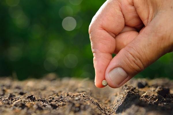 Bạn có đang góp phần gieo trồng thứ gì đáng để gặt hái bởi người khác không? ảnh 4