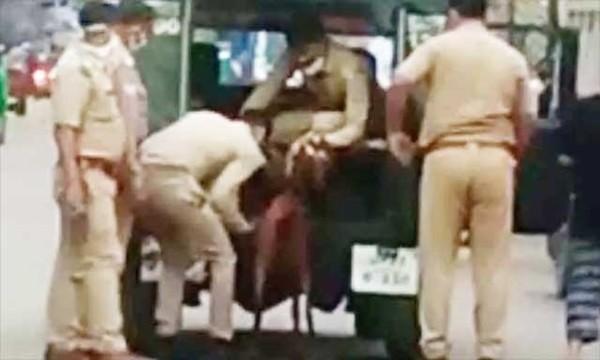Ấn Độ: Một con dê bị cảnh sát bắt vì tội không đeo khẩu trang ở nơi công cộng ảnh 1