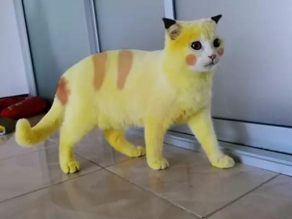 Cố chữa nấm cho mèo, cô chủ khiến em mèo biến thành màu vàng hoe như Pikachu ảnh 3