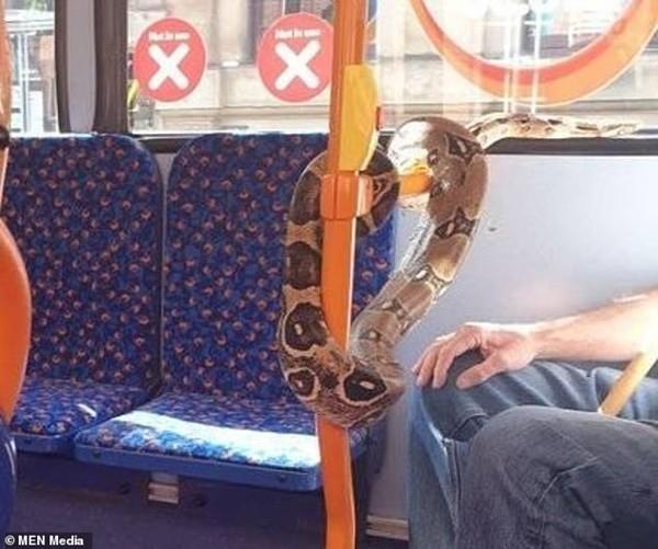 Dùng khăn thay khẩu trang xưa rồi, có người quấn cả rắn thay khẩu trang trên xe buýt này ảnh 3