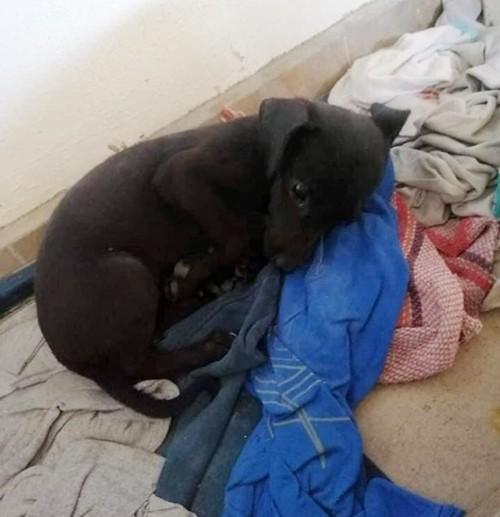 Mexico: Sự thật kinh hoàng về cặp đôi tốt bụng thường nhận nuôi chó con bị bỏ rơi ảnh 3