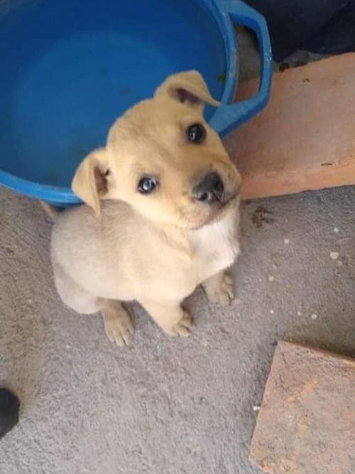 Mexico: Sự thật kinh hoàng về cặp đôi tốt bụng thường nhận nuôi chó con bị bỏ rơi ảnh 2