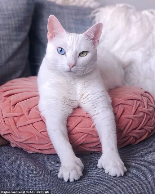 Bé mèo bị chủ cũ vứt đi chỉ vì 2 mắt có 2 màu khác nhau đã tìm được gia đình mới ảnh 1