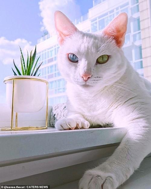 Bé mèo bị chủ cũ vứt đi chỉ vì 2 mắt có 2 màu khác nhau đã tìm được gia đình mới ảnh 3