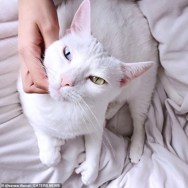 Bé mèo bị chủ cũ vứt đi chỉ vì 2 mắt có 2 màu khác nhau đã tìm được gia đình mới ảnh 4