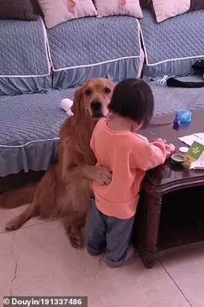 Chú chó bảo vệ cô bé bị mẹ mắng dễ thương thế này, tại sao lại bị cộng đồng mạng nghi ngờ? ảnh 4