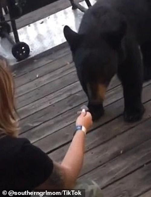 Cho gấu ăn dưa hấu rồi chụp ảnh khoe trên mạng, cô gái không biết mình đối diện hậu quả gì ảnh 3