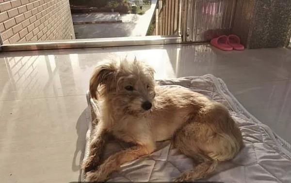 Bị chủ bỏ quên ở cách nhà 60km, chú chó tìm đường suốt gần một tháng để quay về với chủ ảnh 2