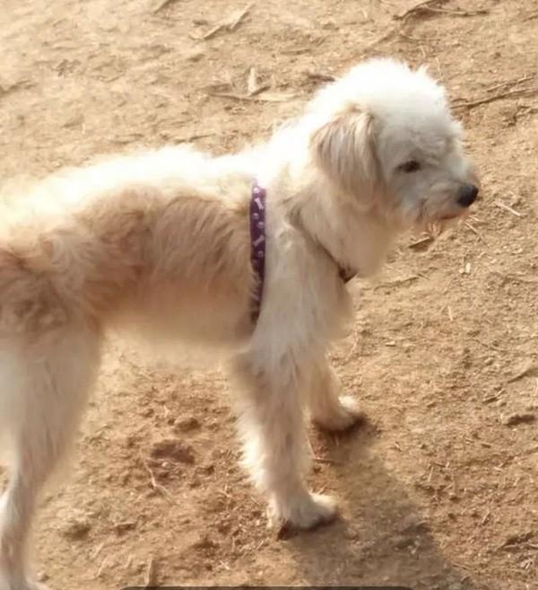 Bị chủ bỏ quên ở cách nhà 60km, chú chó tìm đường suốt gần một tháng để quay về với chủ ảnh 1