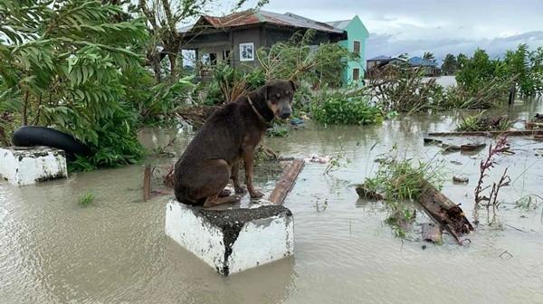 Bão Molave (bão số 9) sắp vào Việt Nam đã có sức tàn phá thế nào khi đi qua Philippines? ảnh 5