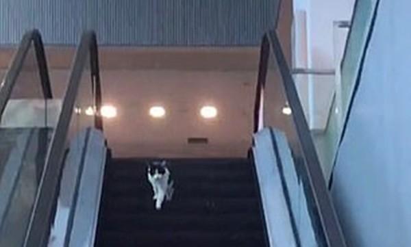 Chỉ là chú mèo chạy nhầm chiều thang cuốn vậy mà hơn 6 triệu người xem, lý do là gì vậy? ảnh 1