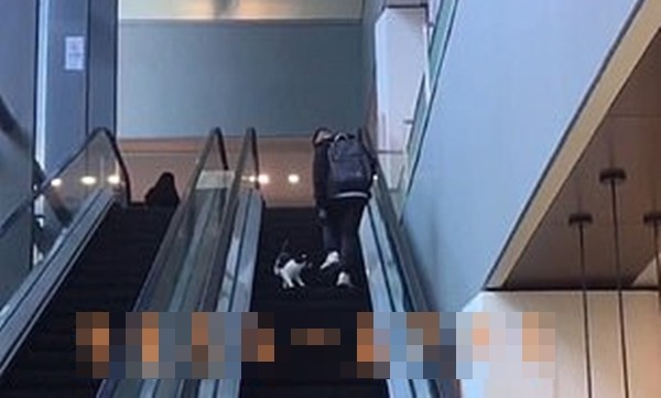 Chỉ là chú mèo chạy nhầm chiều thang cuốn vậy mà hơn 6 triệu người xem, lý do là gì vậy? ảnh 2
