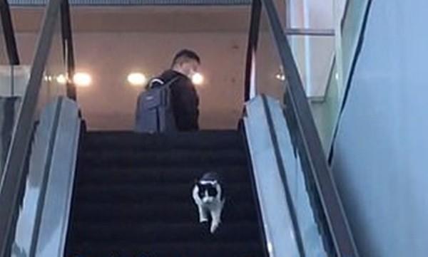 Chỉ là chú mèo chạy nhầm chiều thang cuốn vậy mà hơn 6 triệu người xem, lý do là gì vậy? ảnh 3