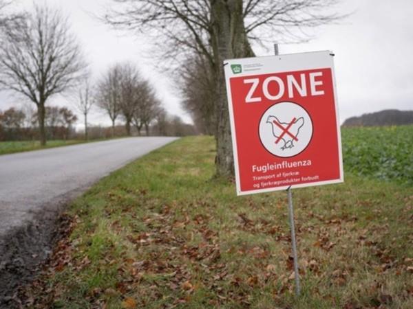 Tổ chức Y tế Thế giới cảnh báo khi virus H5N8 đã lây từ gà sang người: Nguy hiểm thế nào? ảnh 4