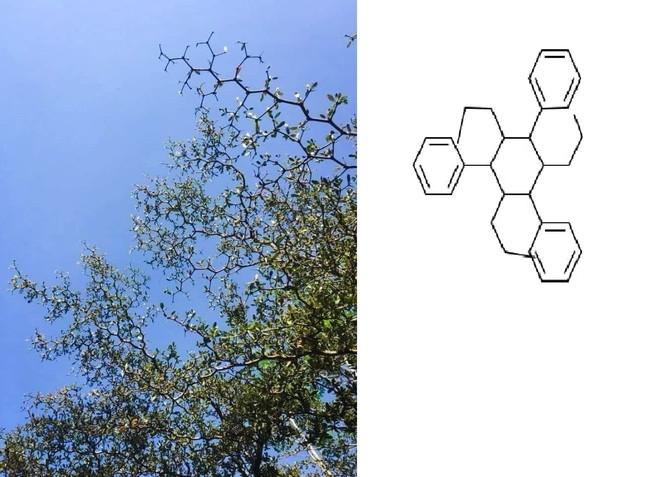 """""""Dân chơi"""" hệ Hóa học: Chỉ nhìn cái cây thôi mà cũng ra... mạch Cacbon ảnh 2"""