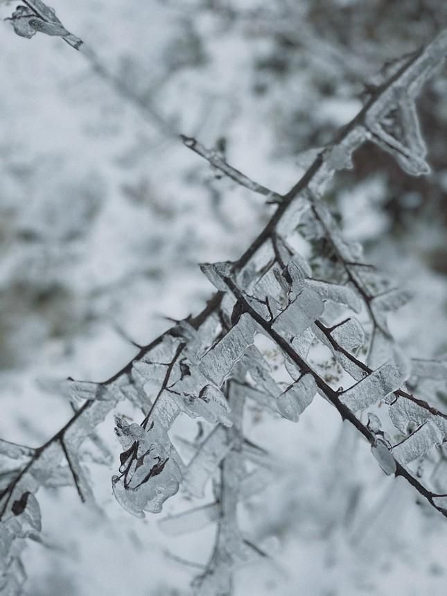 Y Tý, Sa Pa những ngày tuyết mùa Đông: Đẹp như lạc vào thế giới cổ tích của Frozen ảnh 6