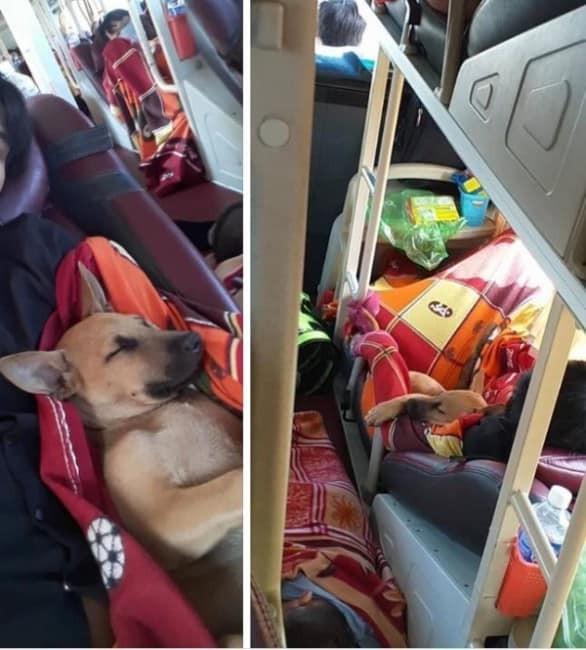 """Khách lén đem """"bé Na"""" lên chuyến xe đêm Cần Thơ - Đà Lạt rồi để sổng khiến cả xe hoảng loạn ảnh 4"""