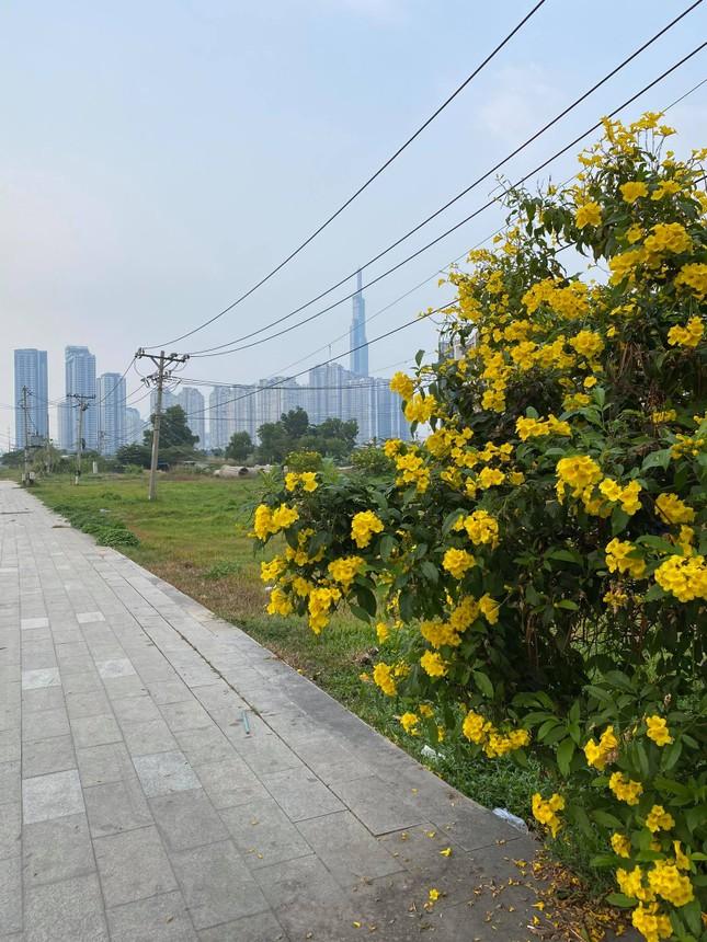 Con đường hoa hoàng yến rực rỡ một góc trời, teen Sài Gòn rủ nhau check-in đón Tết ảnh 6