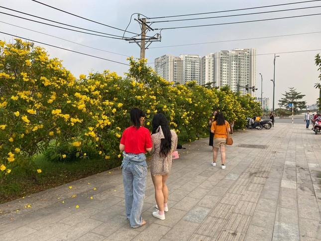 Con đường hoa hoàng yến rực rỡ một góc trời, teen Sài Gòn rủ nhau check-in đón Tết ảnh 3