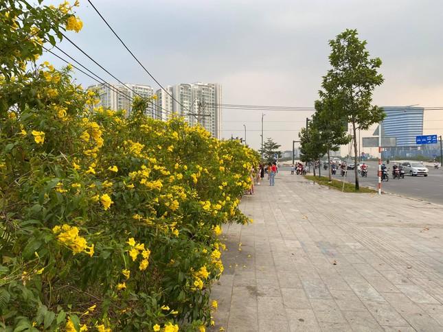Con đường hoa hoàng yến rực rỡ một góc trời, teen Sài Gòn rủ nhau check-in đón Tết ảnh 2