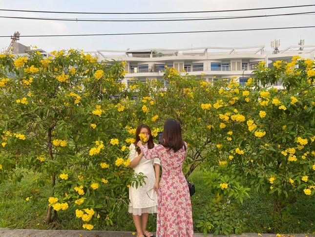 Con đường hoa hoàng yến rực rỡ một góc trời, teen Sài Gòn rủ nhau check-in đón Tết ảnh 4