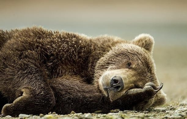 Hai du khách Nga trốn vé vào Công viên Quốc gia rồi đấm xỉu chú gấu vì tưởng là bảo vệ soát vé ảnh 2