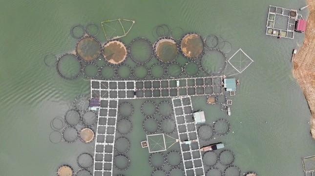 Trại cá tầm 100 tỷ đồng giữa lòng hồ thủy điện Sơn La ảnh 1