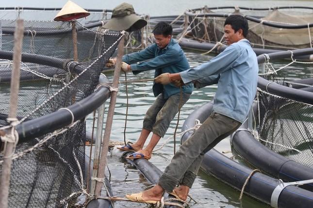 Trại cá tầm 100 tỷ đồng giữa lòng hồ thủy điện Sơn La ảnh 4