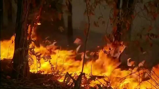Nước Úc vật lộn với các vụ cháy rừng tồi tệ nhất trong 1 thập kỷ ảnh 6