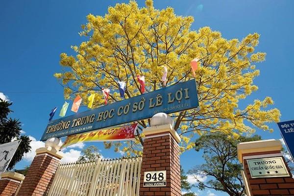 Cây phượng vàng độc đáo ra hoa giữa mùa Đông khiến học trò mê mẩn ảnh 1
