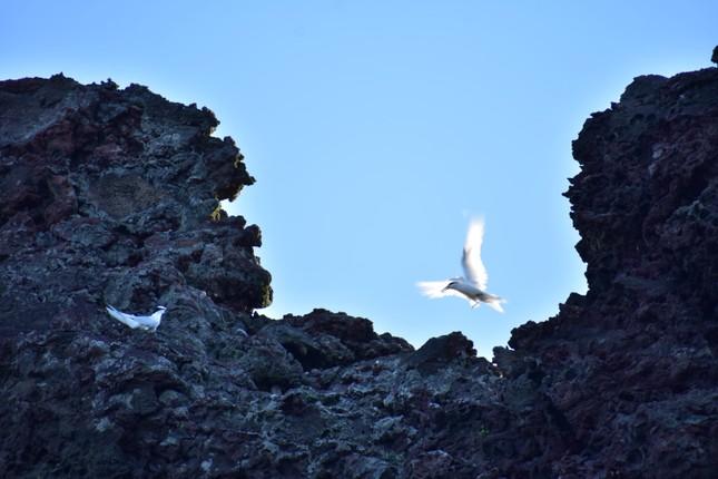 Khám phá 'hòn ngọc nhỏ' từ thiên đường rơi xuống thềm biển Đông ảnh 4
