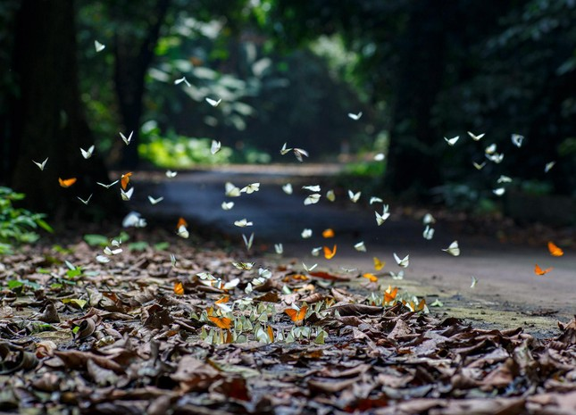 Điểm du lịch dịp nghỉ lễ gần Hà Nội: Săn bướm ở Cúc Phương, ngắm trọn đất trời ở Hang Múa ảnh 1