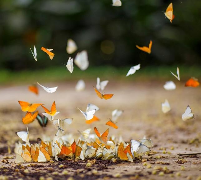 Điểm du lịch dịp nghỉ lễ gần Hà Nội: Săn bướm ở Cúc Phương, ngắm trọn đất trời ở Hang Múa ảnh 2