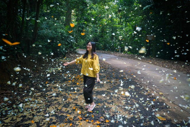 Điểm du lịch dịp nghỉ lễ gần Hà Nội: Săn bướm ở Cúc Phương, ngắm trọn đất trời ở Hang Múa ảnh 4