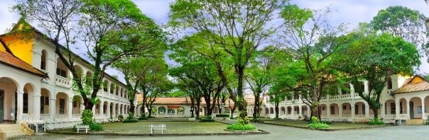 Vụ cây đổ khiến học sinh tử vong: Nguy cơ tiềm ẩn từ cây tuổi đời lâu năm tại các trường ảnh 5