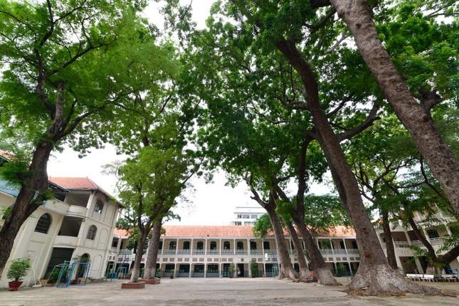 Vụ cây đổ khiến học sinh tử vong: Nguy cơ tiềm ẩn từ cây tuổi đời lâu năm tại các trường ảnh 2