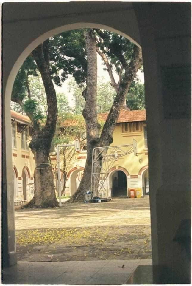 Vụ cây đổ khiến học sinh tử vong: Nguy cơ tiềm ẩn từ cây tuổi đời lâu năm tại các trường ảnh 9