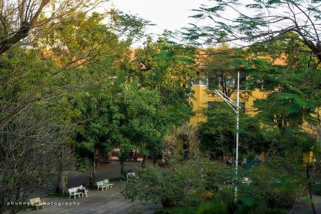 Vụ cây đổ khiến học sinh tử vong: Nguy cơ tiềm ẩn từ cây tuổi đời lâu năm tại các trường ảnh 7