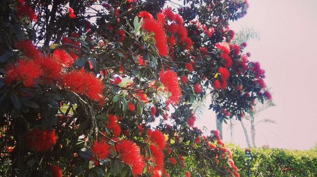 """Bài dự thi cuộc thi """"New Zealand - Bật mí trăm điều thú vị"""": Mùa Hè thiên đường ở Auckland ảnh 5"""