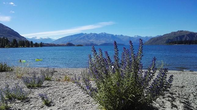 """Bài dự thi cuộc thi """"New Zealand - Bật mí trăm điều thú vị"""": Mùa Hè thiên đường ở Auckland ảnh 2"""