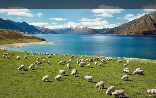 """Bài dự thi """"New Zealand - Bật mí trăm điều thú vị"""": New Zealand và niềm mơ của bố ảnh 3"""