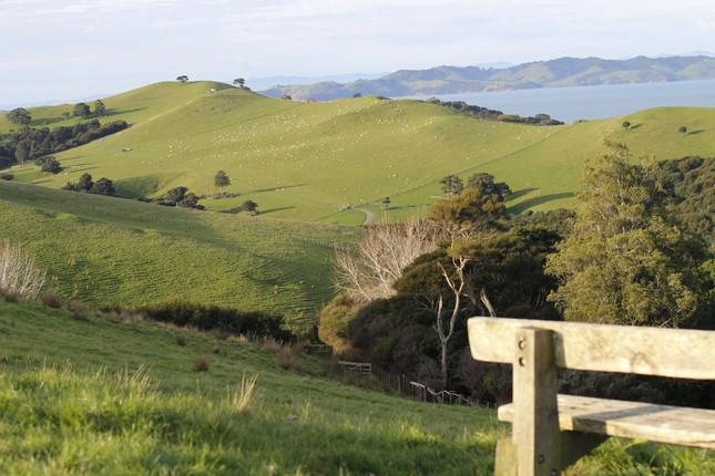 """Bài dự thi """"New Zealand - Bật mí trăm điều thú vị"""": Tháng 10 - mùa cỏ nở hoa và ấn tượng New Zealand của tớ ảnh 1"""