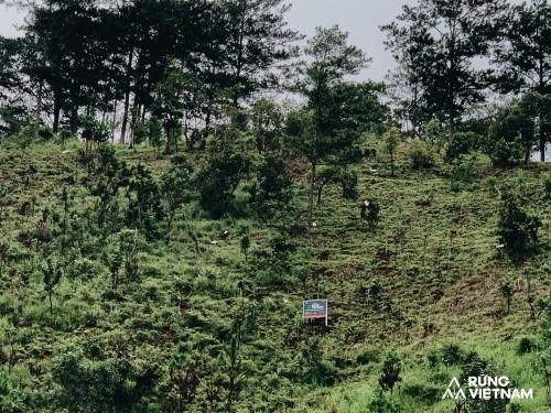 """Hà Anh Tuấn thực hiện dự án """"Rừng Việt Nam"""": Trồng 2 cánh rừng với hơn 1.800 cây xanh ảnh 2"""