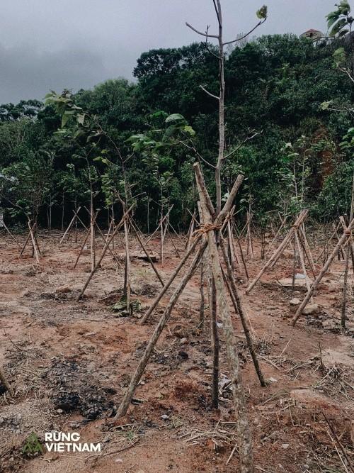 """Hà Anh Tuấn thực hiện dự án """"Rừng Việt Nam"""": Trồng 2 cánh rừng với hơn 1.800 cây xanh ảnh 3"""