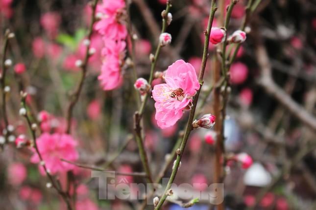 Chợ hoa dịp cận Tết và nỗi lòng người bán khi dịch COVID-19 bùng phát ảnh 2